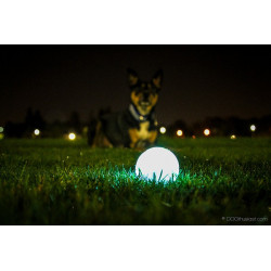 Chuckit Firefly LED Glow in the dark ball (medium)